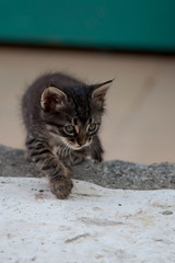 Stray Kitten Prowling, Sarigerme (flatworldsedge) Tags: cat turkey kitten feline bokeh turquoise hunting whiskers stray intrepid gaze stalk stalking feral prowl dalaman mugla prowling sarigerme yahoo:yourpictures=babyanimals