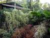 DSC02699 (rantavani) Tags: plantas tropicais