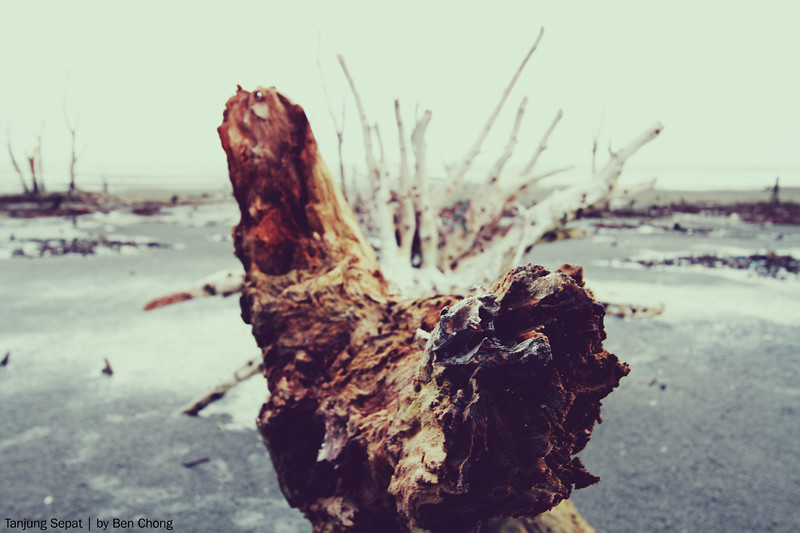 Tanjung Sepat - Dried Tree