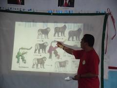 Seven macaques species