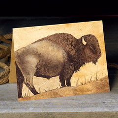 Bison (snailspacepaper) Tags: buffalo environment wildlifecards naturecards recycledcards