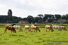 Ameland, the Netherlands (Hannie van Heugten) Tags: netherlands island waddeneiland nederland ameland van eiland hannie hollum horizontoer heugten