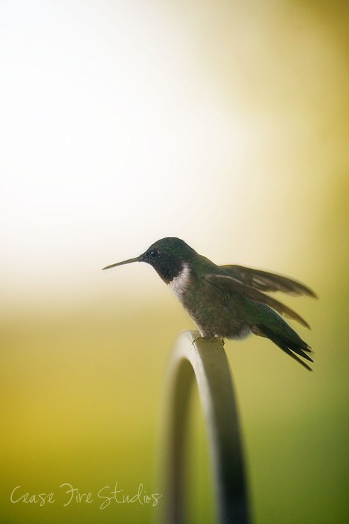 08-16-humming2