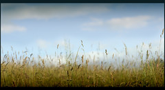 grass (19sascha78) Tags: blue sun green clouds nikon d7000