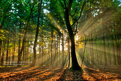 Enlightment (Lucky Lucas) Tags: morning sun green forest sunrise glory rays rise sunrays bos shining hdr d300 supershot photomatixpro impressedbeauty 1024mm flickrstruereflection1