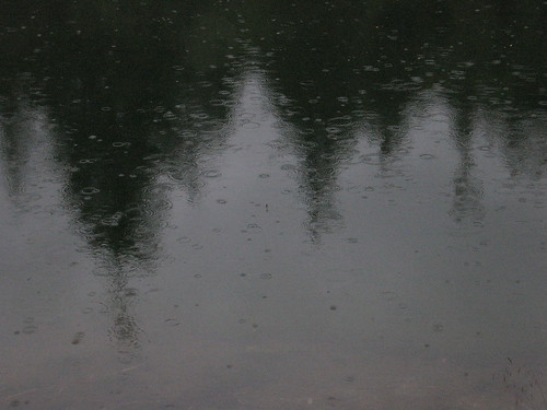 tongass rain