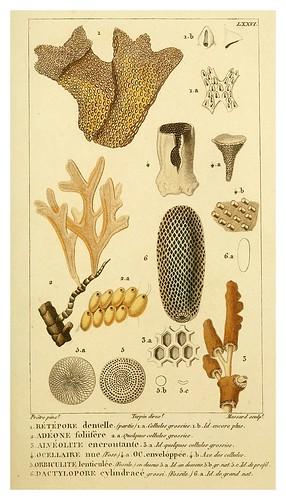 020-Manuel d'actinologie ou de zoophytologie (Volume plates) 1834- H.-M. Ducrotay Blainville
