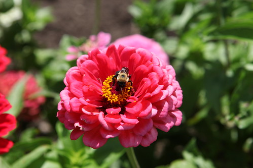 Bees and flowers, a co-evolutionary relationship