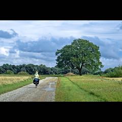 on the road (~janne) Tags: woman nature germany deutschland 50mm flora europa europe f14 natur pflanzen nat olympus menschen frau baum radtour wetzlar niedersachsen leitz janusz radegast manuell summiluxr e520 ziob