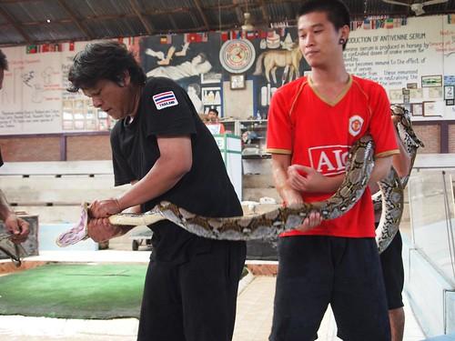 Thailand Cobra Show - Bangkok
