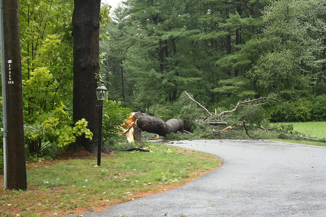 neighbor's tree down after irene