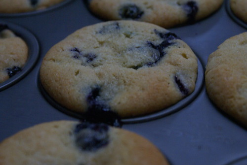 blueberry muffins in bad lighting