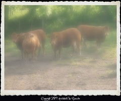 Meuhhhh (Christabelle12300!,( trs peu prsente)) Tags: france animal rural cow campagne vache agricol bovin