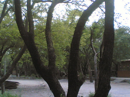 Tree004