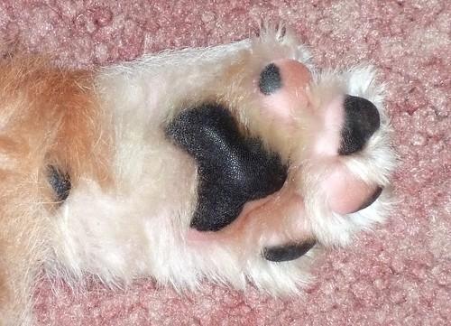 Henry Feet!