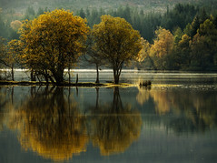 summer mourning (Dove*) Tags: autumn trees water scotland solitude getty rps reflextion aberfoyle lochard queenelizabethforestpark