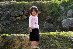 48_LAO76510073 (TC Yuen) Tags: vietnam sapa hmong terracefarming locai