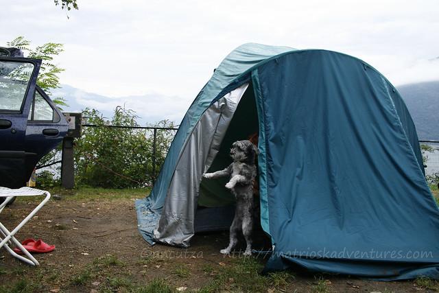 immagine in campeggio con il cane su lago maggiore