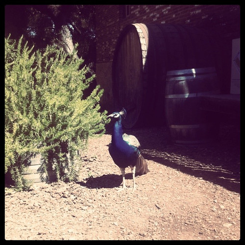 official winery mascot