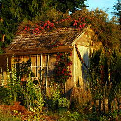 garden shed . . . (dragonflydreams88) Tags: sbfmasterpiece sbfgrandmaster dragonflydreams88
