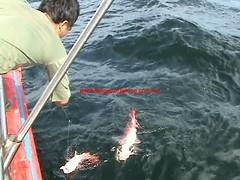 20100308 (fymac@live.com) Tags: mackerel fishing redsnapper shimano pancing angling daiwa tenggiri sarawaktourism sarawakfishing malaysiafishing borneotour malaysiaangling jiggingmaster