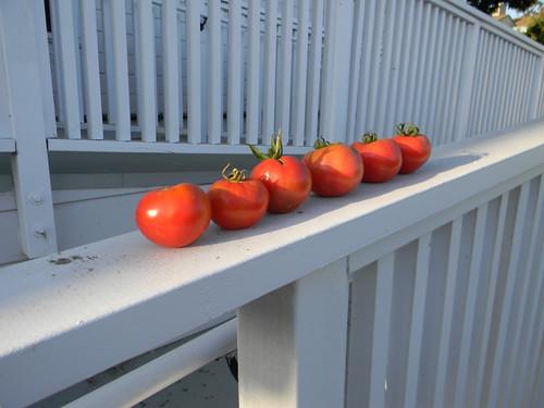 The Tomato Six