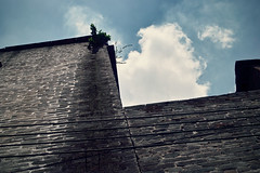 -Greens on high wall (jdleung) Tags: sky cloud brick wall leaf  foshan      dp2s