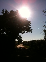 Bundook Hill (the_original_ninja_from_ginj) Tags: road light summer sun tree sunshine dick hill burnt boxted bundook