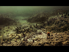 Another World (DA.S.) Tags: sea underwater alien bottom dive surreal scuba diving snorkeling depth underwaterlandscape mouseion
