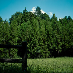 Sky Wisp Forrest Field Fence (jacob schere [in the 03 strategically planning]) Tags: park blue summer sky urban cloud tree green grass japan museum fence garden square landscape tokyo japanesegarden countryside sticks skies post forrest space jacob rail ground communication clear posted chiba cedar gr lucid dic ricoh grounds wispy wisp kawamura m2c schere  2011 jacobschere lucidcommunication