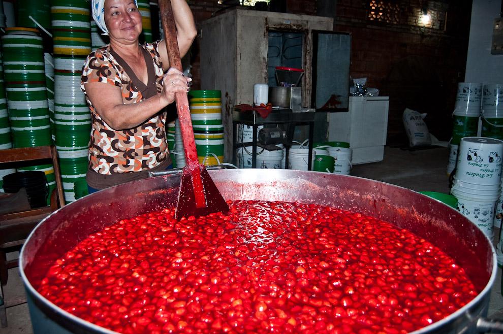 """La esposa de Carlos Quintana, María Miriam Florentín, conocida como """"Nena"""", trabaja en la preparación de la pulpa de frutilla, una elaboración que convierte las frutillas de su huerta en materia prima para las heladerías. El proceso de preparación de la pulpa de frutilla lleva 3 horas de cocción y 96 horas de estacionamiento en refrigeradores antes de ser enviadas a sus clientes. """"En Asunción si probaste cualquier helado con pulpas naturales de frutillas es muy probable que las mismas se hayan producido en esta casa"""", dijo el propietario Carlos Quintana. (Elton Núñez)"""