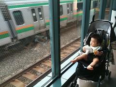 電車見るとらちゃん(2011/9/11)