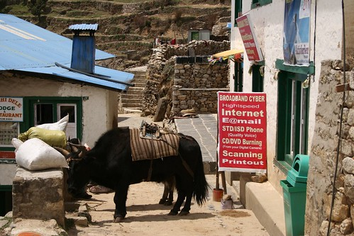 """Yaks and the internet - two different and useful means of communication."", photo: Tanel Saimre"
