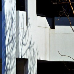 whisper of winter left (SteffenTuck) Tags: morning light white tree dark outside spring shadows exterior brisbane vegetation steffentuck