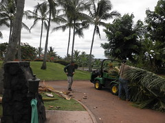 WAIKELE COUNTRY CLUB 139