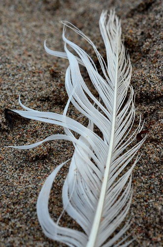 white feather_012