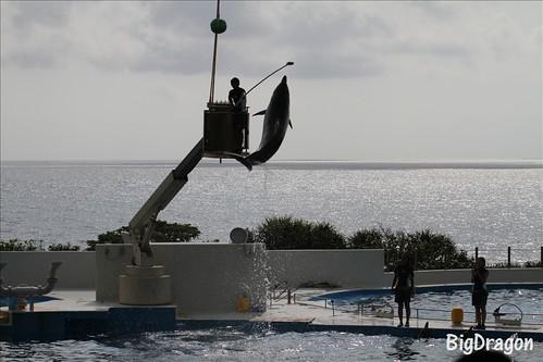 Big jump of dolphin