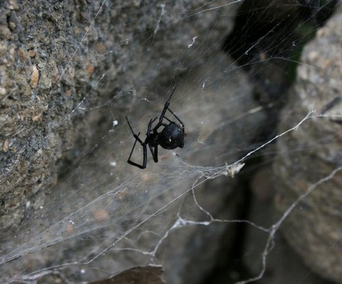 BlackWidow2August2011