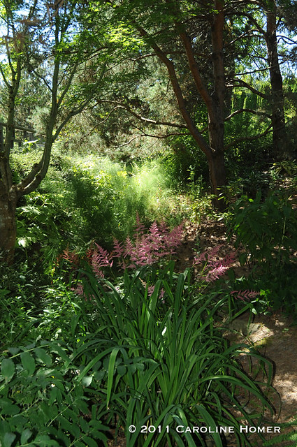 Sun and shade in the Dawley Fern Garden