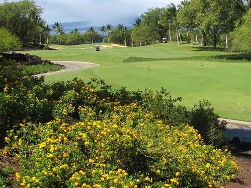 Maui Chiaki 565