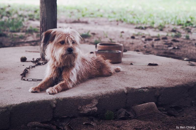 Animal - Dog