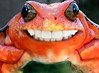 Smiling Frog (Gravityx9) Tags: smile photoshop reptile teeth frog toad chop ribbit froggie haveaniceday 0811 smilingfrog redfrog psfo frogsmile 082111 frogteeth