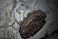 (Sameli) Tags: urban cold detail history suomi finland underground rust war military pipe rusty bunker soviet era exploration ue urbex kirkkonummi