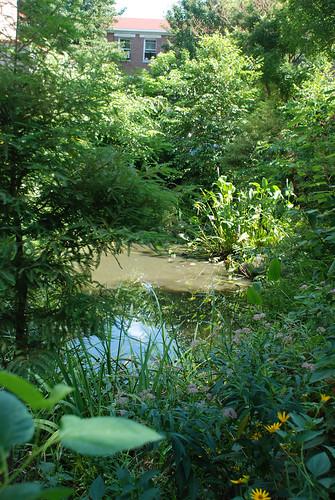 wetlandpond08