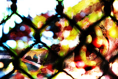 fenced_blastd (Dominick Guzzo) Tags: color photoshop fence vibrant blend blendtrend