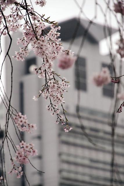 110403_133557_小石川後楽園