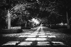 Path at Nelson-Atkins Museum (tlc) Tags: bw vanishingpoint blackwhite oz path kansascity nelsonatkinsmuseumofart blackandwhtie img7229