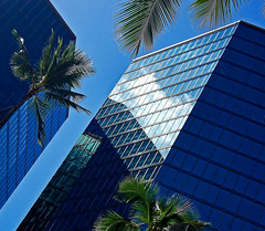 Disorientation (jcc55883) Tags: skyline buildings reflections hawaii nikon oahu palmtrees highrise honolulu bishopstreet alamoanaboulevard nikond40