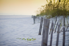 sand fences (The Million Dollar Project) Tags: wood white beach gulfofmexico golden sand gulf cross wind florida cost southcoast whitesand quartz seashore pensacola goldenhour panhandle pensacolabeach reduce deepen simplify nationalseashore pcola beachsand casinobeach 3rdcoast plands phtotography crossbeach southernbeaches gulfsouth quartzsand 2likru rsdphoto rsdphotography