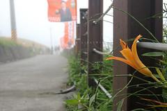 IMGP8465 (Rick.Ying) Tags: taiwan hualien sixtystonemountain goldenneedles fulitownship jhutianvillage